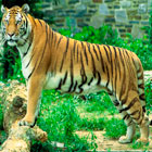 kerala-wildlife-tour
